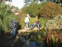 Monifieth cub scouts pond dipping with Michael Laird