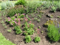 New planted bed at Rock Garden July 2014