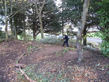 clearing the woodland area